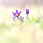 Autre Flore