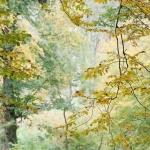 Pastel de tons d'automne