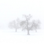 Magie de la neige et du brouillard