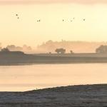 Lac du Der - envol au petit matin