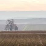 paysage champenois en hiver